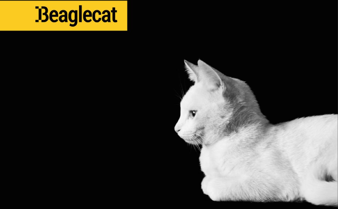 Beaglecat Blog